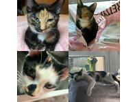 Cats for sale (under offer)