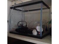 Basic fish tank