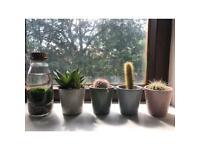 Cactus, succulent, marimo plants