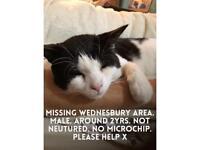 Missing cat. Male. Wednesbury area