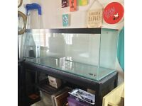 GREAT DEAL- 160l custom AQUARIUM plus great accessories! less than a year old, perfect for Discus