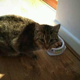 Lost cat Cavehill/Ballysillan area, Belfast