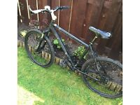 Bicycles for sale - ALL MUST GO