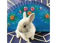 Adorable bunnies available