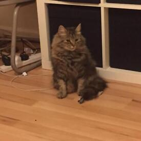 MISSING CAT FROM DAGENHAM BECONTREE £200 REWARD