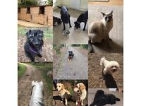 Wimborne based Dog Walking, Pet Sitting and Freelance Horse Groom Service