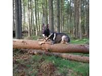 Matschenka Dog Walking, Training and Doggy Day Care