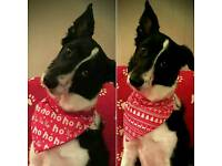 Handmade Christmas Dog Bandana