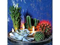 Succulent and cactus planter uk