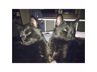 Jack and Victor need temp home 1 year