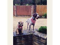 Dog Walker/Runner available!