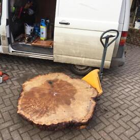 Huge Burr Oak Cookie Cut £550 RARE