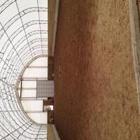 Pasture board access to indoor + outdoor arena trails