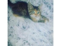 BEAUTIFUL KITTENS (DIFFERENT PRICES)