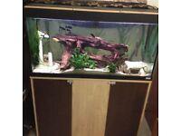 55 Gallon Tropical fish Aquarium plus accessories & 30 fish