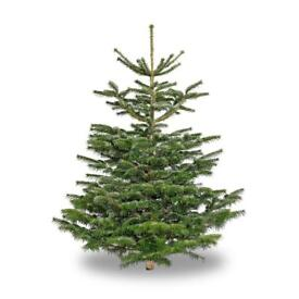 Quality Christmas Trees For Sale long lasting!