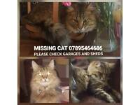 Missing cat from Walton le dale suspected stolen please keep an eye out for sales adds 07895464686
