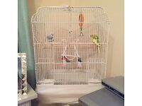 Two budgies with white cage
