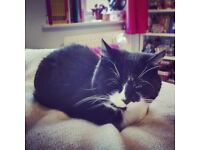 2 bed Bristol property wanted for 2 professionals and 1 well-behaved cat £750pm max.