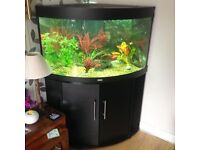 Corner fish tank 190l for sale open to offers