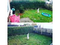 Ace & Sons * Garden & Property Maintenance * Swansea *
