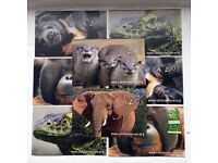 8 Colchester Zoo tickets available