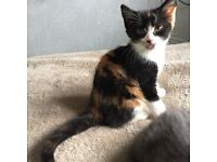 • • • Beautiful kittens for sale • • •