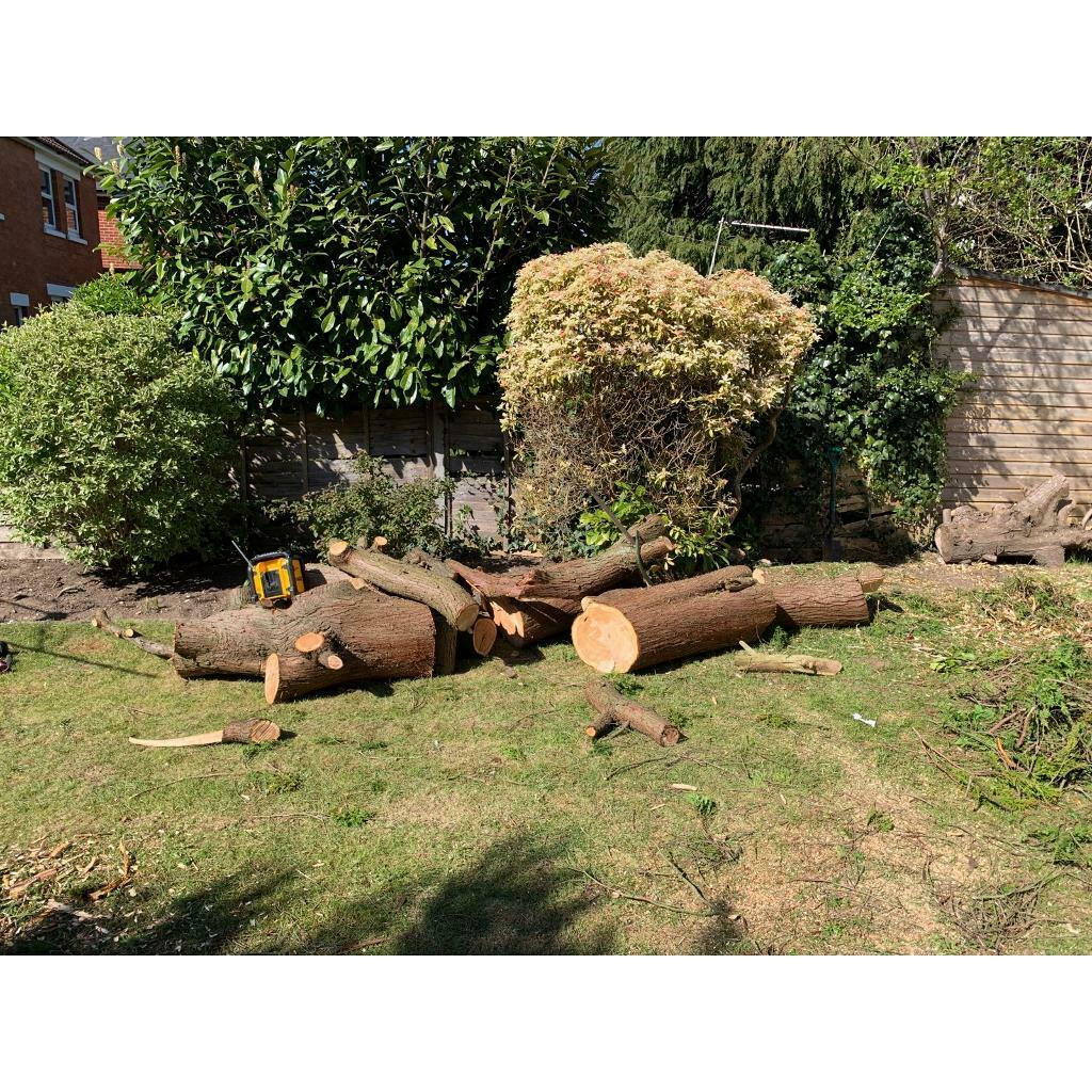 Free fire wood   in Bournemouth, Dorset   Gumtree