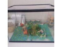 Fish tank aquarium with all Equipment
