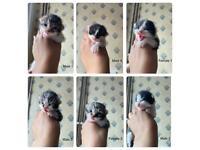 Kittens kittens kittens