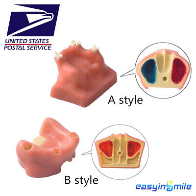 Easyinsmile Dental Tooth Model Sinus Lift Practice Study Teach Model Ab Style