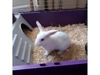 Female white bunny