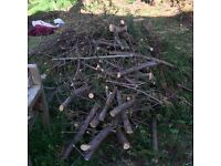 Free firewood and logs
