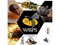 Pest Control in london Mice Rat bedbugs Cockroaches flies fleas wasps moth mouse extermination