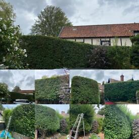 Now taking bookings for hedge cutting/shaping and reductions