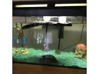 Two Terrapins and aquarium for sale