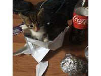 Make kitten