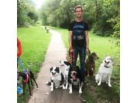 Dog behaviour, training & care