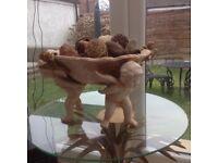 Cherub bowl table centrepiece