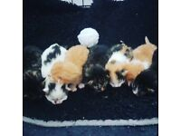 7 beauitful kittens 🐈😻😸