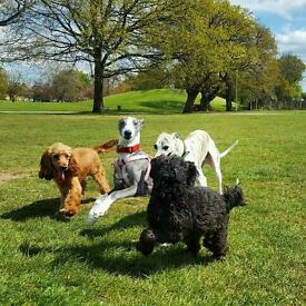 SUPER PETS: Dog-mad, dog walker