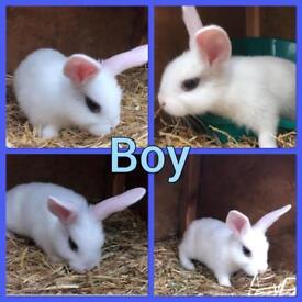Beautiful friendly bunny rabbits