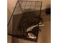 FREE! Large dog crate