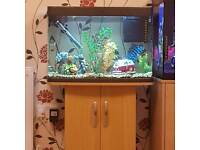 Panorama 64 fish tank and stand