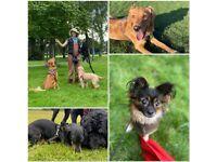 Nature Nurture Dog Walking and Puppy Visits - Leith * Dog Walker Edinburgh