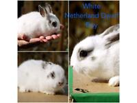 Rabbits for sale - Gumtree