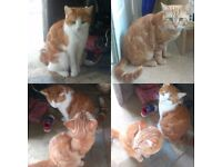 Reluctant sale. Our 2 family cats, Ginger and Biscuit.