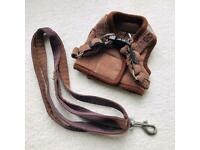 XXS puppy harness & lead - free to collect