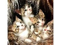 Absolutely stunning kittens for sale.