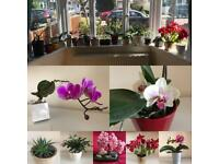 Collection of house plants Orchids Aloe Vera